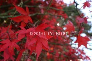 近くから撮った紅葉