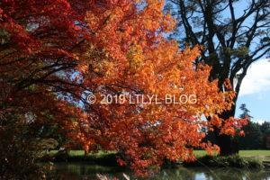 水辺の近くの紅葉