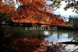水辺に浮かぶ紅葉