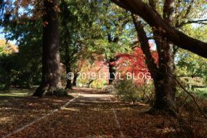 紅葉のある公園の道
