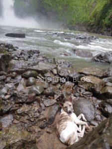 滝まで付いてきた犬