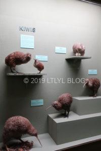 色んな種類のKiwi birds