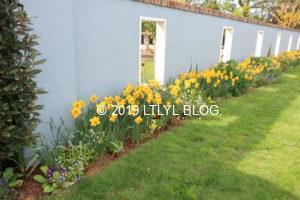 庭に咲くdaffodil