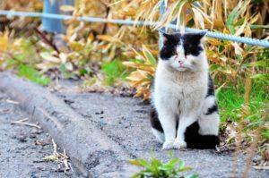 理解できないという表情の猫