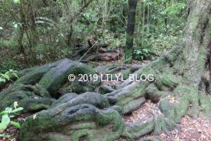 迫力のある木の根