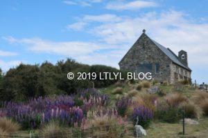 善き羊飼いの教会とルピナス