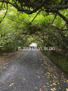 トトロの道みたいな木のトンネル